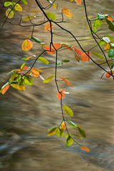 dogwood, trees, merced, river, merced river, yosemite, sierra, water, fall, ca, california, mountains