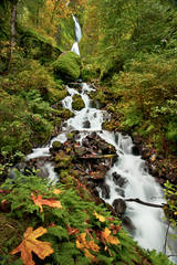 wahkeena, falls, or, oregon, columbiia river gorge, trees, water, waterfalls, pacific northwest, fall, creek
