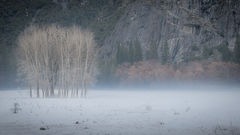 Ahwahnee Meadow Winter Mist