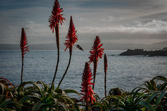 monterey, bay, ca, california, sunrise, water, ocean, pacific, flora, aloes, aloe, cypress, sunrise, hummingbird, surf