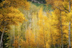 colorado, co, san juan mountains, mountains. trees, aspens, fall, fog, atmospherics, owl creek, snow, flora, autumn, rockies, kebler pass, crested butte