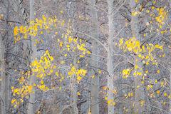 Eastern Sierra, Sierra, CA, California, Fall, mountains, foliage, leaves, autumn, aspens, flora, trees, water, bishop, creek, rock creek, light