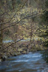 Blossoms Over Little River
