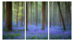 Blue Forest Fog Triptych