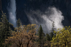 yosemite national park, yosemite, ca, california, trees, black oak, meadow, el capitan, flora, fog, mist, steam, sunrise, morning, bridalveil falls, falls, water