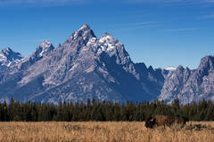 mountains, Wyoming, wy, Tetons, Grand Teton Park, landscape, Fall, trees, aspens, fall color, jackson, oxbow bend, sunrise, snake river, buffalo