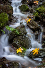 San Francisco Bay, San Francisco, California, CA, water, Mt Tamalpais, bay area,  golden gate, cataract trail, cataract creek, fall, color
