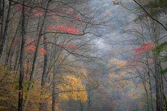 great smoky national park, smokys, mountains, fall, water, nc, tn, north carolina, tennessee, maples, colors, national, park, flora, trees, oconaluftee, river, fog, sunrise, fog