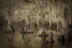 cado lake, texas, tx, bald cypress, cypress, trees, moss, spanish moss, bayou, marsh, swamp, la, Louisiana,