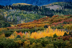 Rocky Mountains, San Juan mountains, rockies, san juans, fall, autumn, color, trees, aspen, pine, fir, colorado, co, owl creek, rainbow, ridgway, Sneffels range, dallas divide