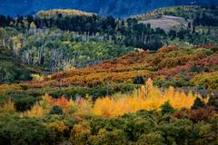 Rocky Mountains, San Juan mountains, rockies, san juans, fall, autumn, color, trees, aspen, pine, fir, colorado, co, owl creek, rainbow, ridgway, Sneffels range, dallas divide