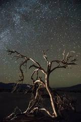 Dali Tree & the Milky Way