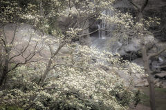 out, south carolina, spring, dogwoods, falls park, appalachia, smoky mountains, water, trees, falls