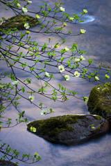 yosemite, national park, park, trees, dogwood, sierra, california, ca, spring, merced river, merced, water