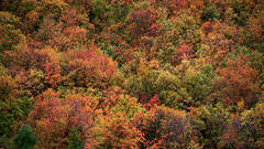 mountains, Wyoming, wy, Tetons, Grand Teton Park, landscape, Fall, trees, aspens, fall color, jackson, targhee, idaho, id