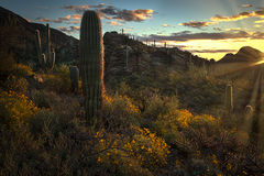 az, arizona, cactus, cacti, saguaro, national, park, tucson, sunset, sunrise, mountains, desert, sonora, wildflowers, spring, southwest, gates passs, sun rays, sun star