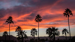 desert, palm, springs, indio, polo field, sunset, ca, california, mojave