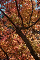 fall, colors, bay area, trees, autumn, leaves, northern california, california