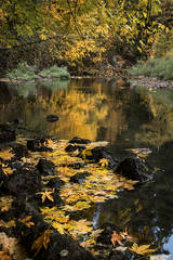 Yosemite, Sierra, mountains, yosemite valley, fall, merced river, merced, water, maples, fall color, fall, reflection