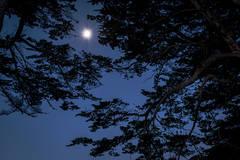 point reyes, seashore, national park, ca, west marin, marin, west, trees, cypress, tree tunnel, sunrise, moonset, moon