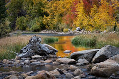 eastern sierra, sierra, aspens,  bishop creek, South fork, fall, ca, california, trees, water, mountains, fall colors, bishop