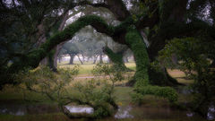 oaks, boughs, trees, fog, sunset, sunrise, south, louisiana, la, tree tunnel