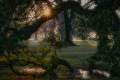 oaks, boughs, trees, fog, sunset, sunrise, south, louisiana, la, tree tunnel, spanish moss, moss,