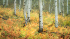 colorado, co, san juan mountains, mountains. trees, aspens, fall, fog, atmospherics, owl creek, ridgway, snow, flora, autumn, rockies