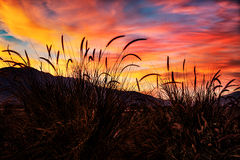 California, ca, sunset, palm trees, trees, grasses, desert plants, coachella valley, palm desert, la quinta, flora, atmospherics, desert, southern ca