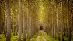 Poplar Grove 2