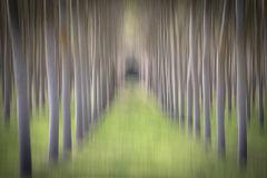 Poplar Grove Impression