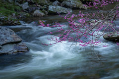 Great Smoky Mountains, smokies, smokys, Tennessee, tn, north carolina, nc, spring, bloom, mountains, water, little river, trees, flora, red bud