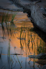 little lakes valley, bear spire, rock creek, sierra, eastern, mountains, reflections, sunrise, sunset, water, grasses, ca, california,