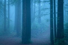 redwood, forest, fog, ca, california, san mateo, purisima, preserve, creek, flora, mood, atmospherics, peninsula, woods, bay area,