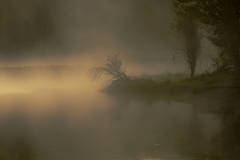 mountains, Wyoming, wy, Tetons, Grand Teton Park, landscape, Fall, trees, aspens, fall color, jackson, oxbow bend, sunrise, snake river, fog, atmospherics