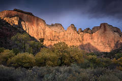 zion, zion national park, mountains, southwest, utah, maples, fall colors, fall, temple, towers,  sunrise, alpine glow,