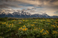 snake river, snake, river, mountains, landscape, tetons, grand tetons, sunrise, clouds, storm, jackson, trees, national park, water, spring, atmospherics, jackson lake, sunset, wildflowers, balsam roo