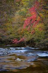 great smoky national park, smokys, mountains, fall, water, nc, tn, north carolina, tennessee, maples, colors, national, park, flora, trees, tremont, river
