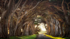 point reyes, seashore, national park, ca, west marin, marin, west, trees, cypress, tree tunnel, sunrise