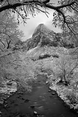 Zion, Zion National Park, ut, utah, red rock, trees, fall, colorado plateau, southwest, mountains, sandstone, zion canyon, weeping rock, cottonwood, trees, water, waterfall, winter, snow, virgin river