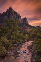 zion, zion national park, mountains, southwest, utah, maples, fall colors, fall, watchman, river, virgin, sunset, alpine glow,