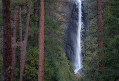 merced river, merced, yosemite, valley, mountains, sierra, trees, sunrise, light, black oak, fall, ca, california, water, trees, flora, winter, yosemite falls, falls