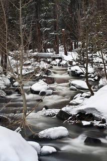 Bishop Creek Aspens, Spring