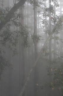 Mt Tamalpais Fog