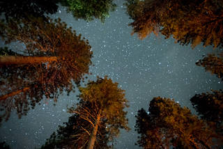 Pines and Stars