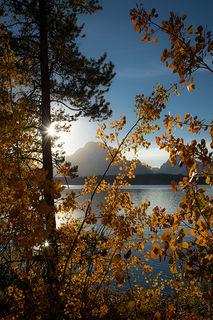 Fall Aspens, Jackson Lake