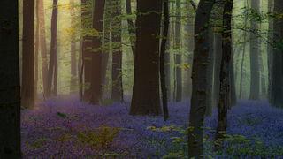 Enchanted Forest Dawn