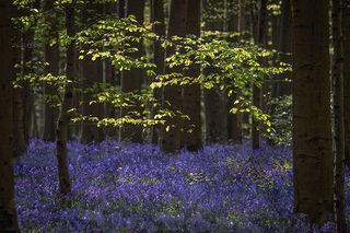 Blue Forest Sunrise