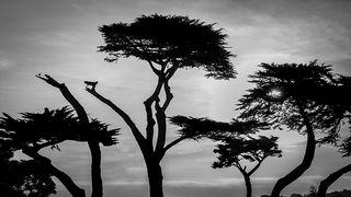 Cypress Skyline, BW