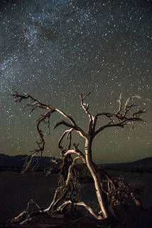 Dali Tree & the Milky Way